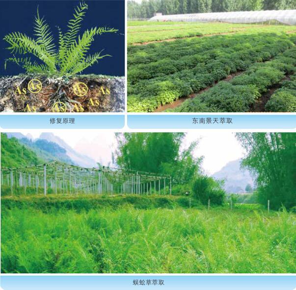 植物萃取技术原理和工程应用实景图.jpg